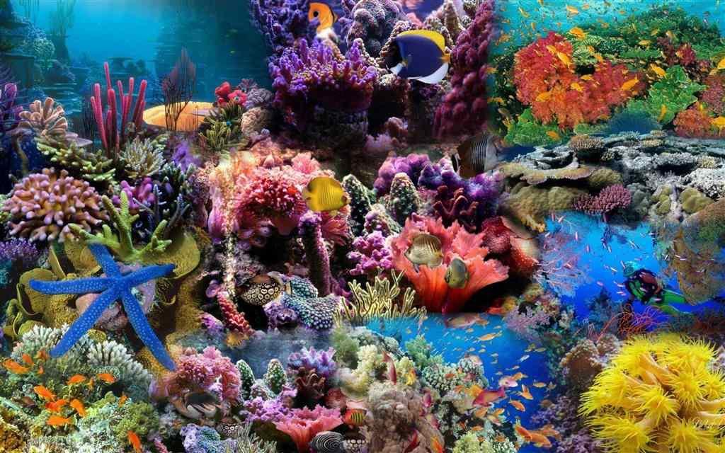 Khu bảo tồn san hô